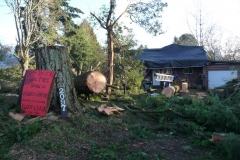 Jan 2021 Lions helping with windstorm damage